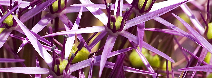 Unique Purple Flower Facebook Cover