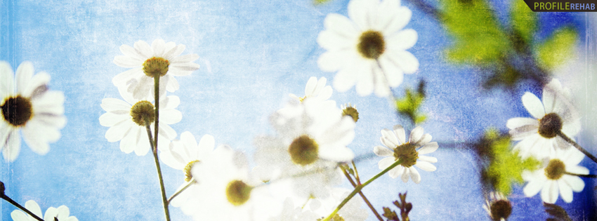 White Flower in Sky Timeline Cover