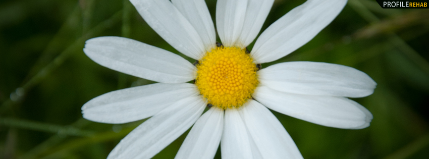 Close up White Flower Facebook Cover