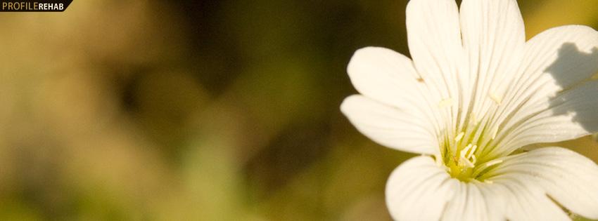 White Flower Facebook Cover