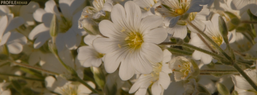 Field of White Flowers Facebook Cover