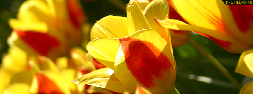 Red & Yellow Flowers Facebook Cover