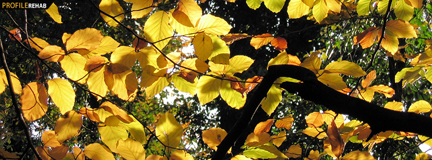 Yellow Fall Leaves Facebook Cover - Autumn Leaves Download - Pretty Fall Leaves Images