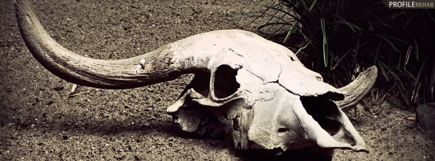 Desert Skull Facebook Cover