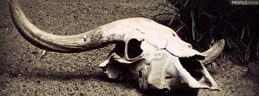 Desert Skull Facebook Cover