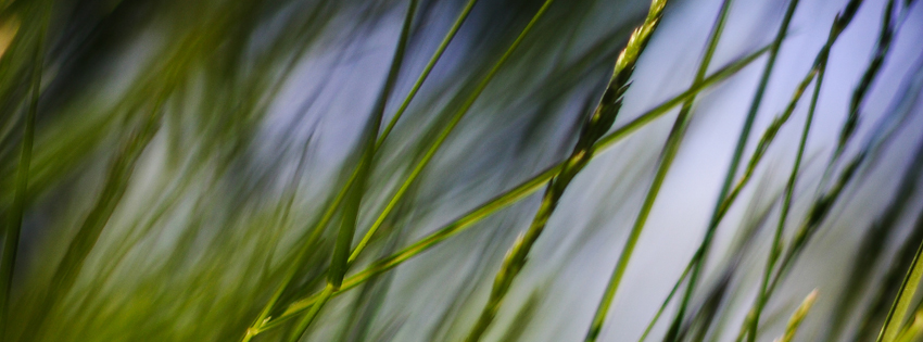 Grass Photograph Facebook Cover