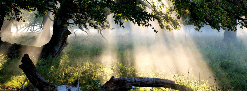 Denmark Light Through Trees Facebook Cover