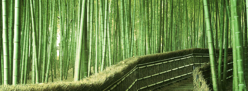 Bamboo Forest in Japan Facebook Cover Photos