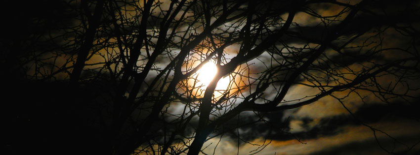 Creepy Moonlight through Trees Facebook Cover - Creepy Halloween Pictures