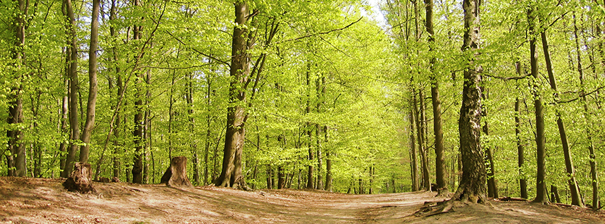 Pretty Green Forest Trees Facebook Cover