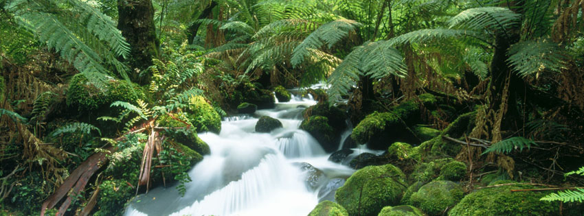 Waterfall in Forest Facebook Cover