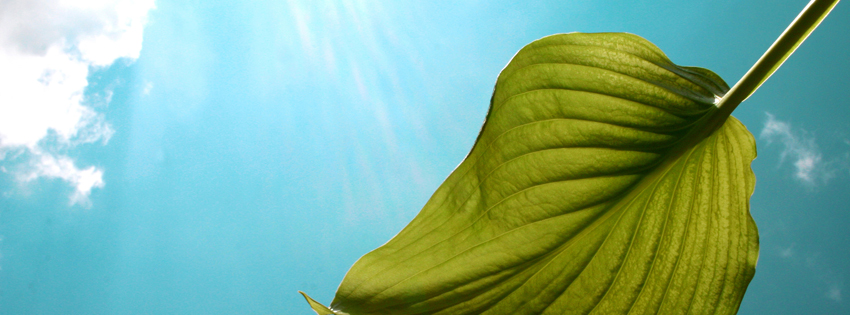 Green Leaf and Blue Clouds Timeline Cover for Facebook