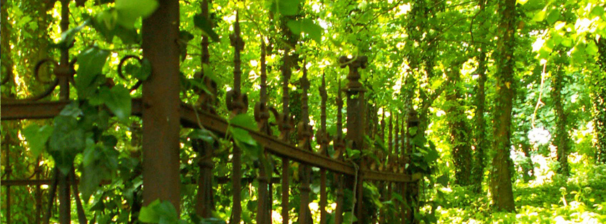Ivy Covered Fence Facebook Cover