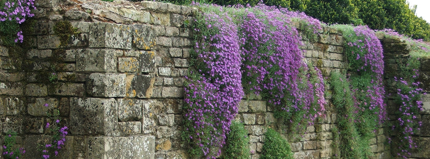 Purple hanging flowers on wall facebook cover for Flower wall garden