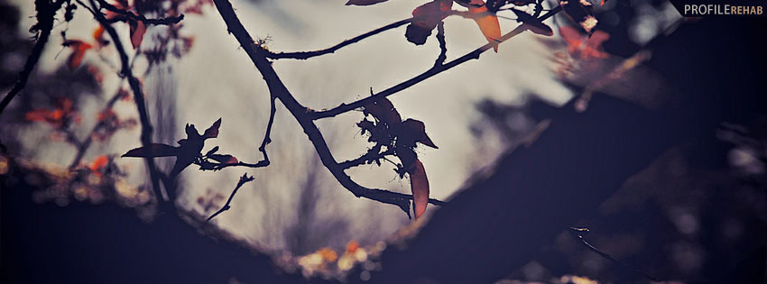 Scenic Dark Tree Facebook Cover Preview
