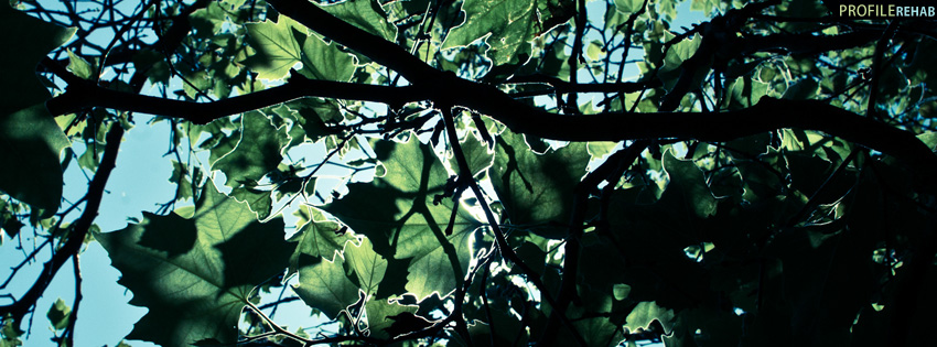 Sky Through Trees Facebook Cover