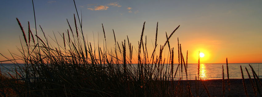 Sunset through Reeds Facebook Cover Preview