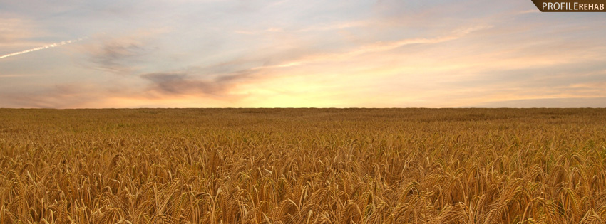 Wheat Field Facebook Cover with Sunset
