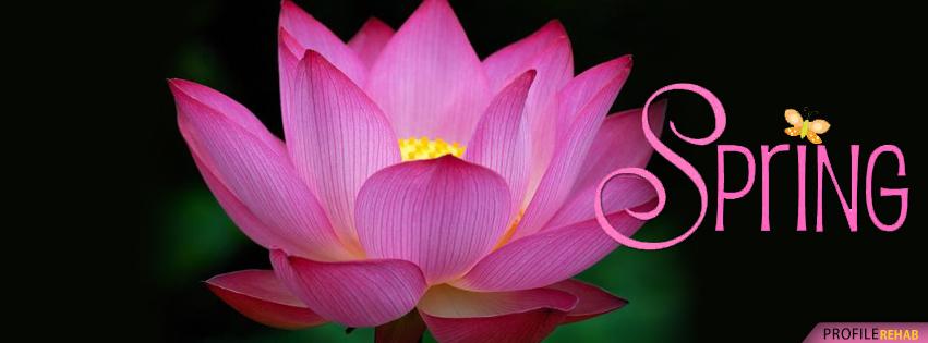 Beautiful Spring Lotus Flower Facebook Cover - Lotus Flower Pictures