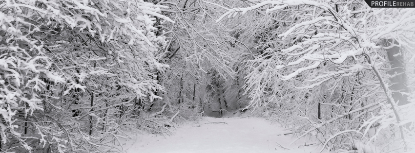 Snowy Winter Forest Facebook Cover