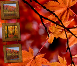 Orange Fall Leaves Twitter Background - Autumn Scenery Design for Twitter