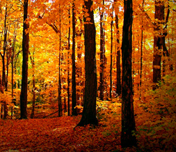 Forest in Autumn Twitter Background - Fall Colors Theme for Twitter