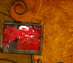Red Leaves Twitter Background - Autumn Tree Layout for Twitter