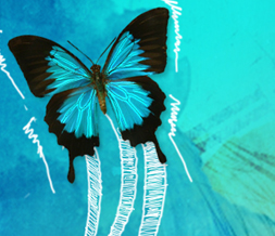 Blue & Pink Butterfly Twitter Background