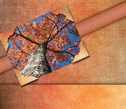 Fall Tree Twitter Background - Pretty Autumn Theme for Twitter