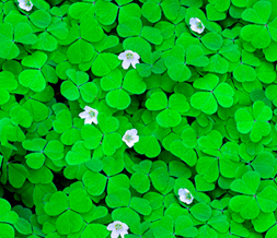Tiling Clovers Twitter Background - Green Clovers Theme for Twitter
