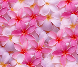 Tiling Twitter Background with Pink Flowers - Flowery Twitter Background