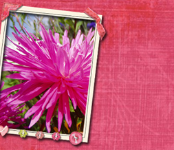 Pink Dahlia Twitter Background - Hot Pink Flower Theme for Twitter