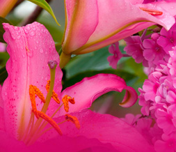 Hot Pink Flowers Twitter Background - Pink Flower Layout for Twitter