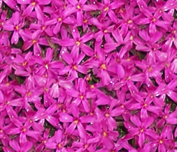 Tiling Pink Flower Twitter Background - Hot Pink Flowers Design for Twitter