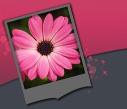 Hot Pink & Gray Flowers Twitter Background - Pink Flower Layout for Twitter