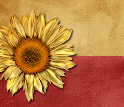 Sunflower Twitter Background - New Sunflower Theme for Twitter