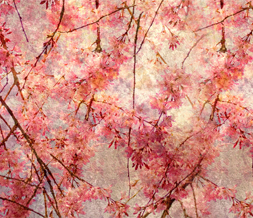 Pink Vintage Flowers Twitter Background-Vintage Theme for Twitter