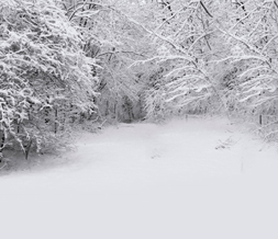 Winter Landscape Twitter Background -  Scenic Snow Background for Twitter